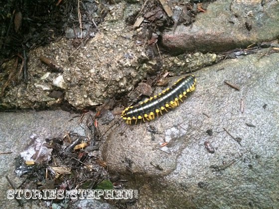 Giant caterpillars and centipedes were all over the park.