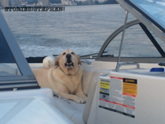 Even Tucker loves riding on the boat!