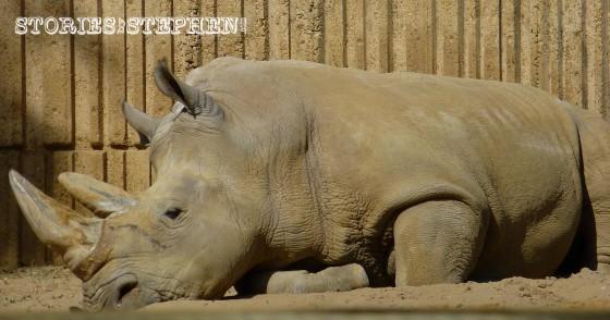 Memphis Zoo 2015 wm 1120w-12-5