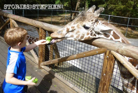 One of the 1st things we did was feed the giraffes!