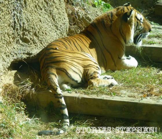 Memphis Zoo 2015 wm 1120w-29-6