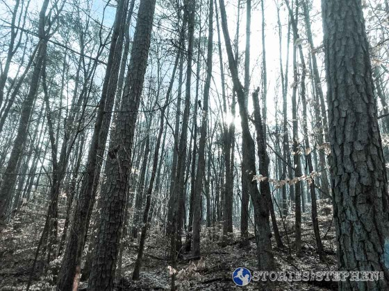 I was all alone in the woods on my 1st trail run. I saw lots of deer, but no other people.