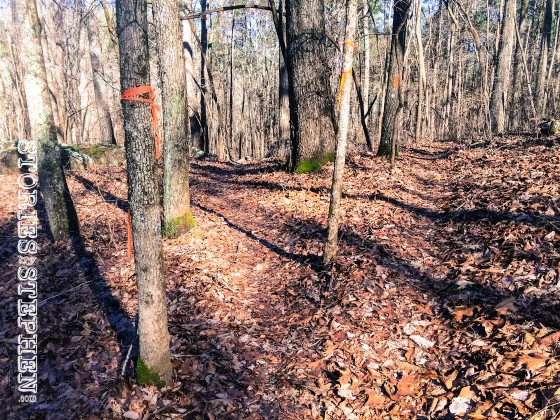 This fork in the Tom Bevill trail has no signs to indicate which direction to go.