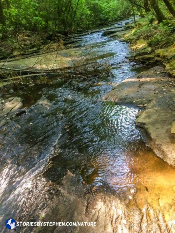 After we saw the snake in the swimming hole, were were pretty bummed that swimming did not work out. We were already in swimsuits and water shoes, so instead we decided to hike through the creek instead.