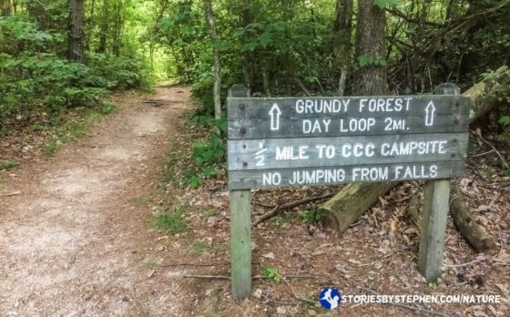After the kids took a nap in the car, we found our trail head. The 2-mile Grundy Forest Day Loop was supposed to have numerous waterfalls and some decent places to swim.
