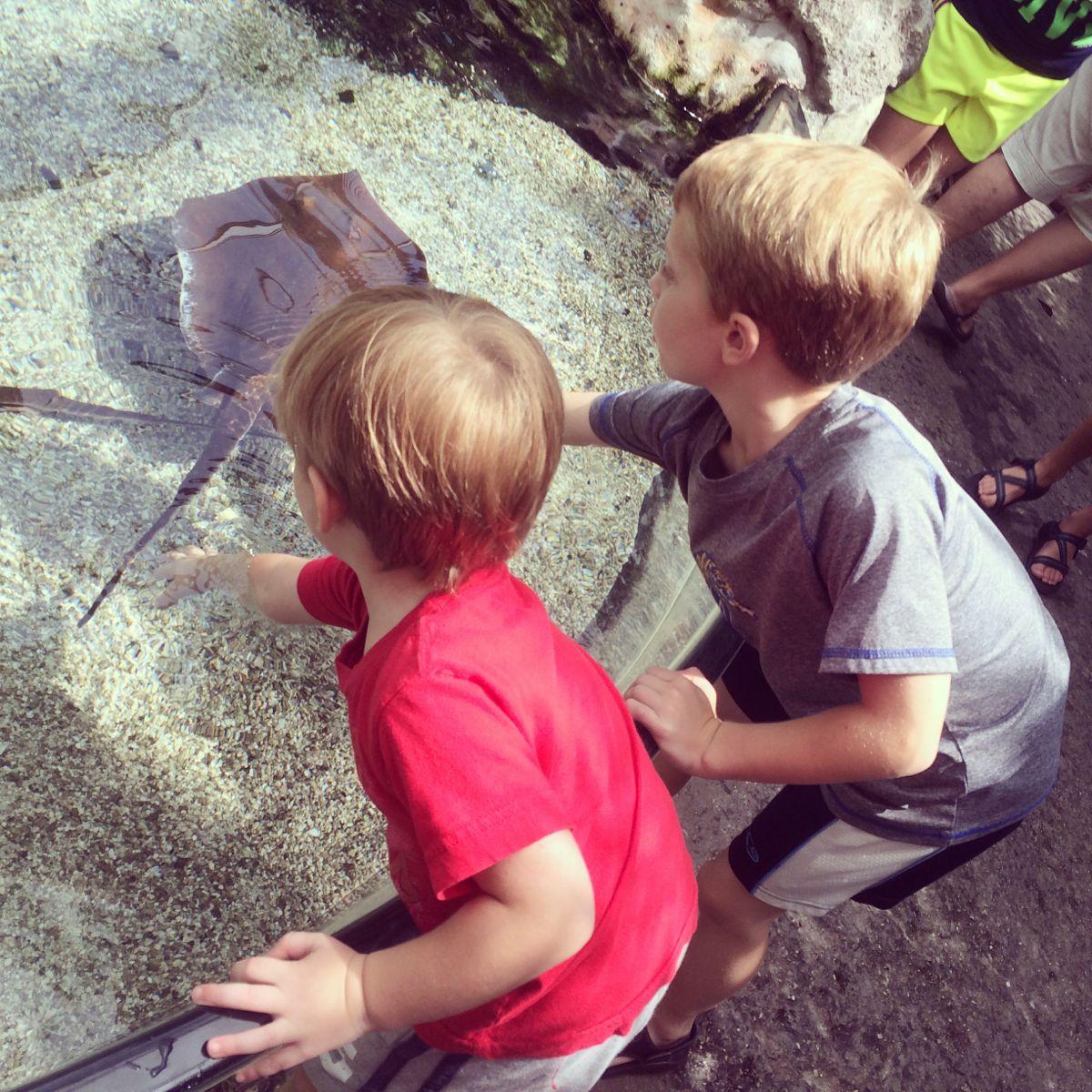 Sam & Will petting stingrays at the Tennessee Aquarium.