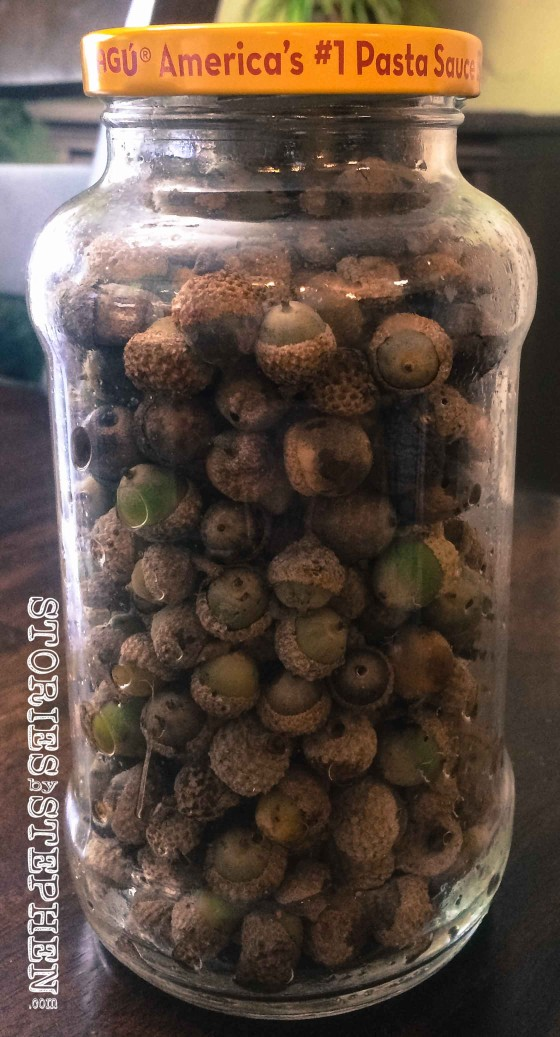 All these acorns were collected in our backyard over Labor Day weekend. The kids actually collected 2.5 jars of acorns in just a few days.