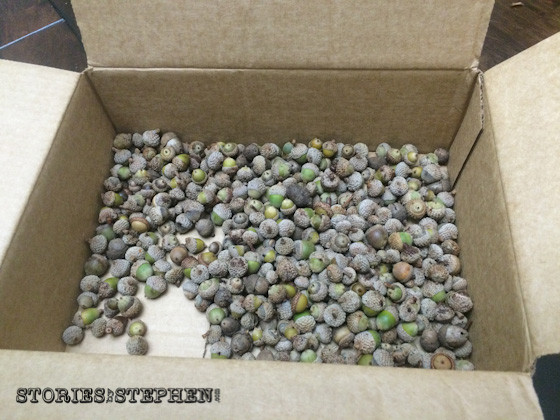 All the counted acorns went into the box.