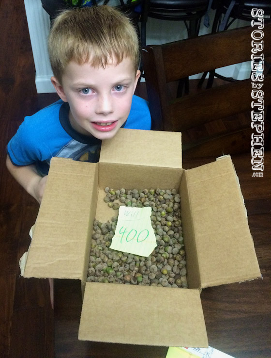 Will won the contest by guessing 400 acorns, just 10 short of the actual count.