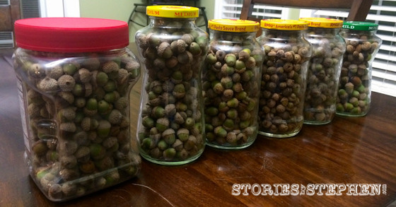 We have collected all these acorns in our yard over the last 2 weeks. We actually had another jar that we sent home with some cousins.