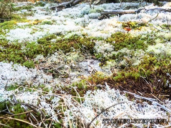 Field of white moss was very cool.