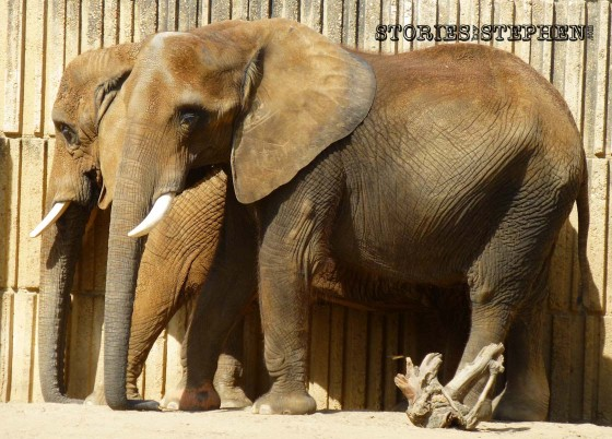 Memphis Zoo 2015 wm 1120w-13-3