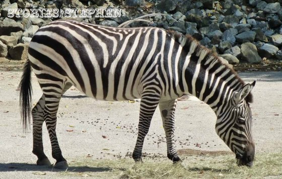 Memphis Zoo 2015 wm 1120w-15-5