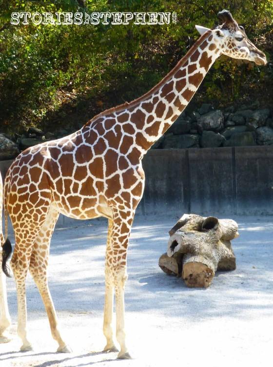 Memphis Zoo 2015 wm 1120w-16-5