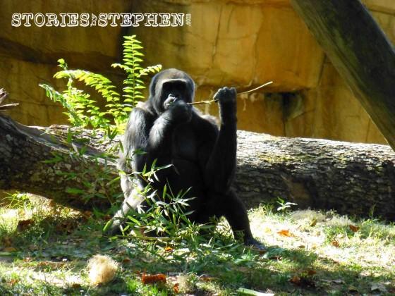 Memphis Zoo 2015 wm 1120w-17-5