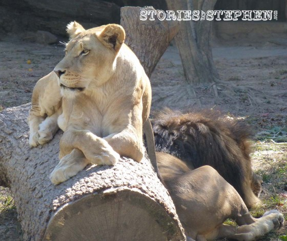 Memphis Zoo 2015 wm 1120w-27-7