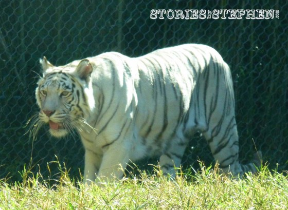 Memphis Zoo 2015 wm 1120w-28-7