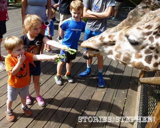 Sam and Julie Beth feeding the giraffe.