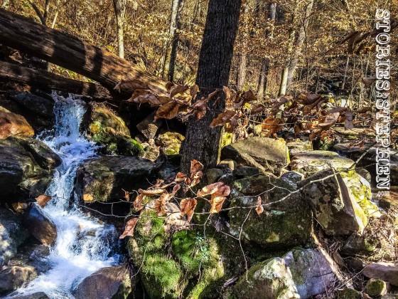 Cutchemine Trail Run (Lake Guntersville State Park) (WM)-33-3