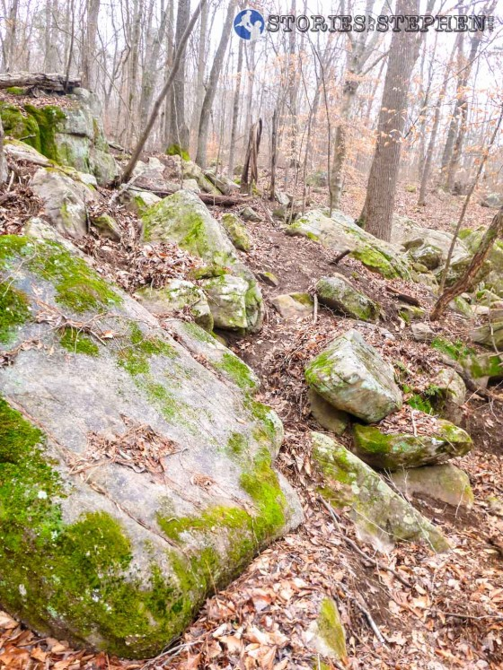 Trail Run 3 Lake Guntersville State Park-21-5 mossy rock