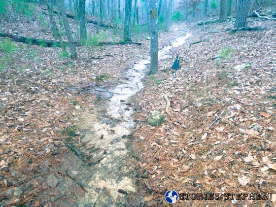 There were stretches of trail where water was flowing down the trail like a shallow creek.