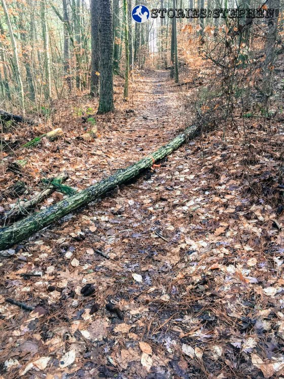 There were many fallen trees on the trails at Lake Guntersville State Park. Often times the trees were several feet thick, requiring me to climb over them.