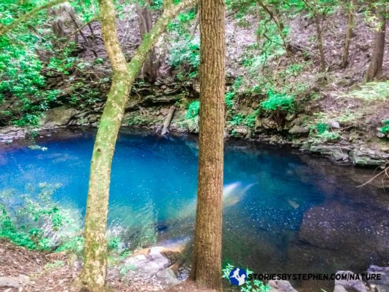 After about a mile we found a beautiful swimming hole on the Grundy Forest Day Loop.