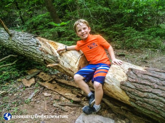 Being in a hurry to get back to camp did not stop the kids from all sitting in this fallen tree with a carved out spot that makes a perfect seat.