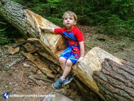 South Cumberland Camping Trip036-6