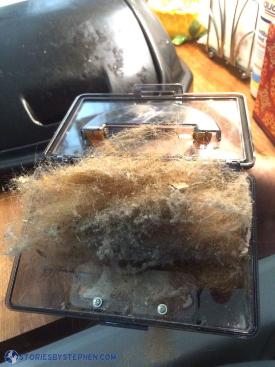 Dog hair is so gross! Our robot vacuum keeps filling up with this stuff, and I am amazed that it keeps finding more!
